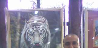 white tiger safari satna madhya pradesh adventures journey