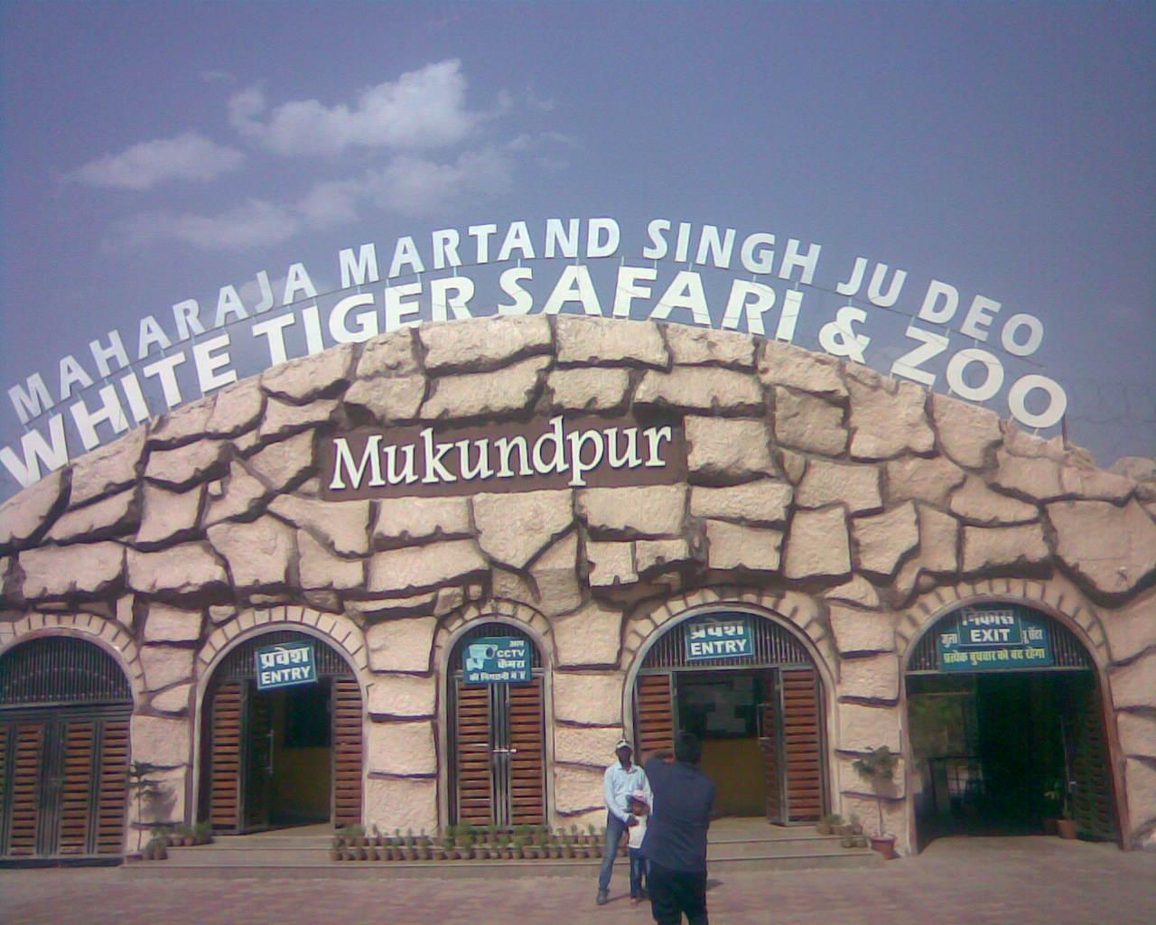 white tiger safari satna madhya pradesh adventures journey